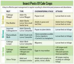 Insect-Free Cole Crops