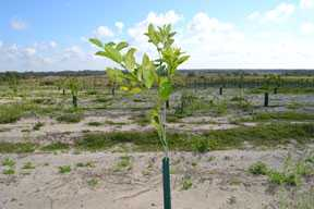 Consider Revising Same Ole Citrus Tree Planting Schedules