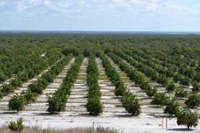 Government Shutdown Squeezes Florida Citrus Crop Forecast