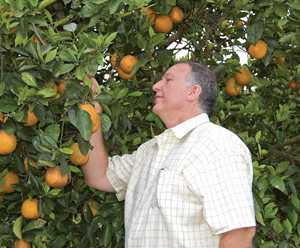 Facing Down a Foe to Citrus