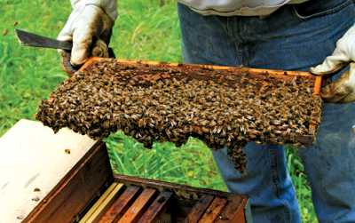 Florida Citrus Growers, Beekeepers Partner For Progress