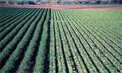 Biorational Approach: Resistance Management