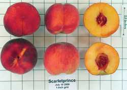 Stone Fruit: Whose (Intellectual) Property Is It Anyway?