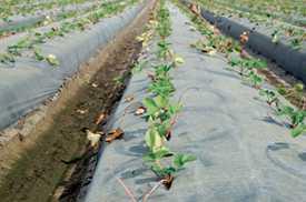 Nominations Open For The Fertilizer Institute's 2016 4R Advocate Awards Program
