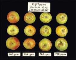 How to Identify Apple And Pear Storage Disorders