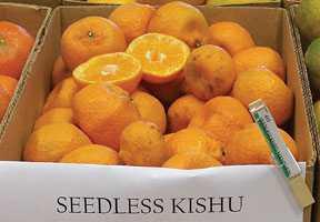 Kishu: The Tiny Wonder