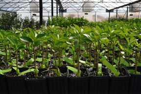 Florida Citrus Nursery Tree Survey Results Released