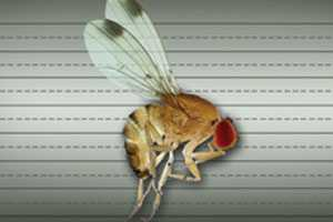 Take A Swat At Spotted Wing Drosophila