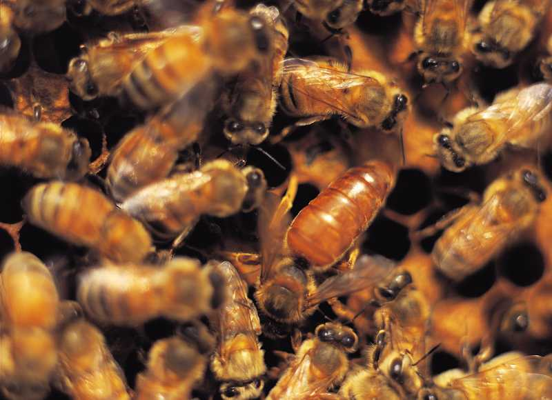New Pesticide Labels To Protect Bees