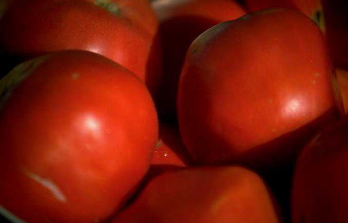 Florida Farmland, Tomato Assets Sell For $48 Million+