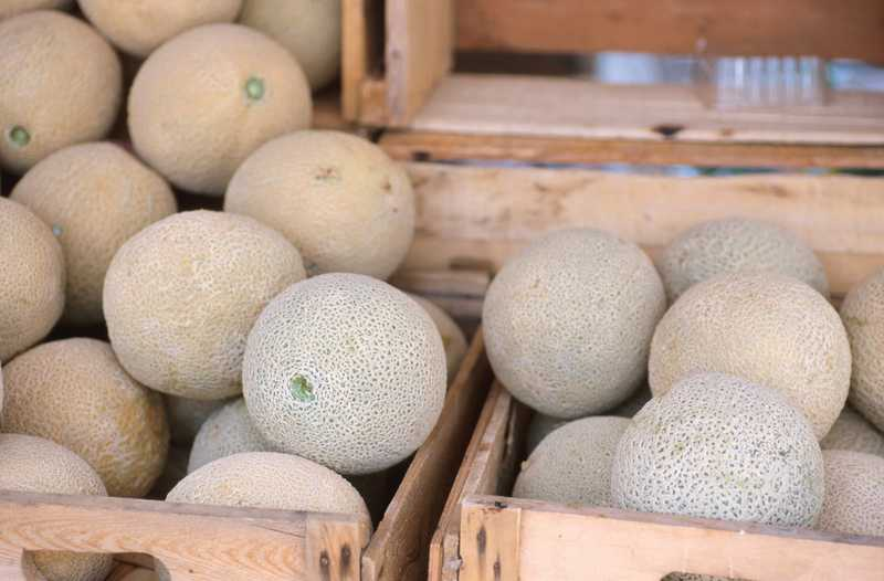 Growers In Cantaloupe Case Expected To Plead Guilty