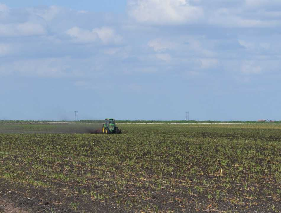 Study: Florida Ag, Nature Industries Stronger Since Recession