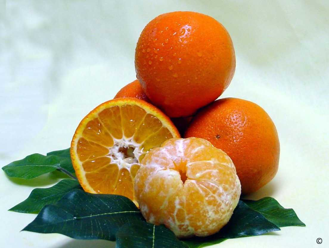 Citrus Nurseries Bank On New Varieties