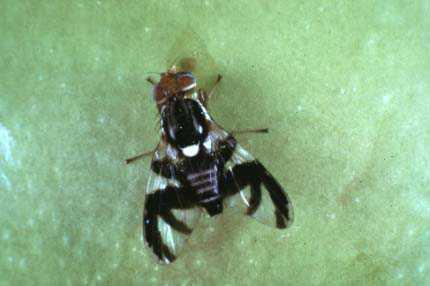 USDA Invests $4.7 Million to Address Critical Plant Pest Problems