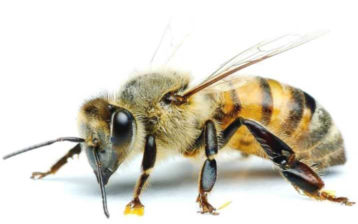 New Practices To Promote Bee Health