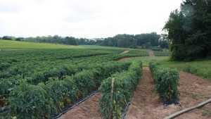 Drip Irrigation Maintenance Pointers