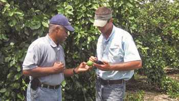 Citrus Ag Internship