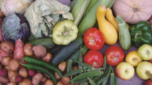 Food Safety Audit Cost-Share Programs Offered