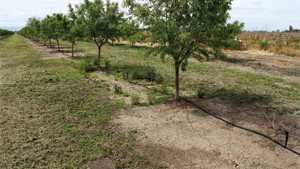 Merivon Fungicide Receives Registration For Almonds In California