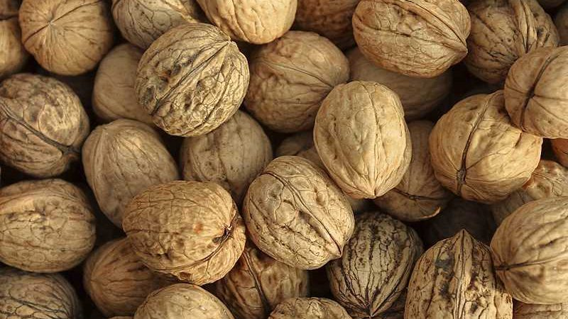 Increased Walnut Assessment Rate Proposed