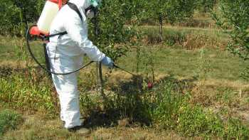 This backpack sprayer is being used to dispense an herbicide for weed control. (Photo  credit: Andrew Landers, Cornell University)