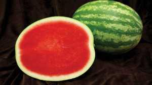 New Watermelon Planting Program For The Southeast U.S.