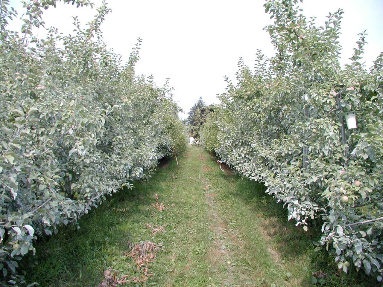 Growing The Eastern Organic Apple Is Possible - Growing Produce