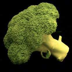 Cornell broccoli project