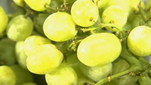 Table Grape Exports Take Hit from Tariffs