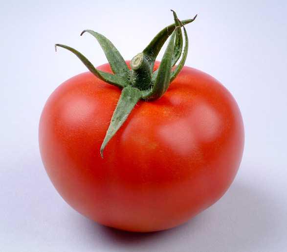hazera genetics introduces high brix gourmet tomato