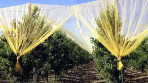 Protecting Your Long-Term Investment In The Orchard