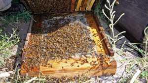 Beekeeper Asks Growers To 'Help Me Save My Bees'
