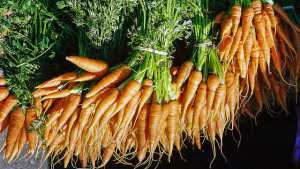 PH-D Fungicide Now Labeled For Chemigation In Carrots