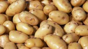 Northwest Region Potato Stocks Hit 87.2 Million Hundredweight