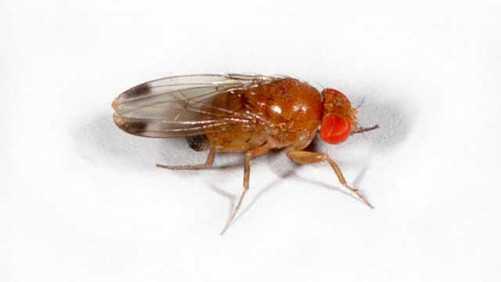 Spotted Wing Drosophila Regional Workshops Held In New York