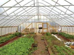 The vegetable crops in this high tunnel are being grown on raised beds.  Photo credit: Bill Lamont