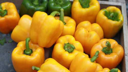 Vegetable Variety Showcase 2013: Seedway