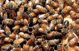 Agriculture Secretary Announces $3 Million For A New Program To Improve Pollinator Health