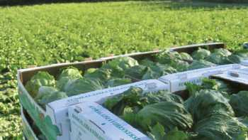 Research on E. coli and Salmonella in lettuce and spinach will help industry make better decisions on growing practices, risk reduction, and regulatory and food safety policies.