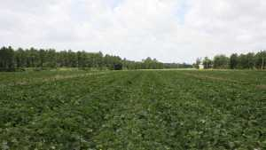 Welcome To The 2014 Vegetable Variety Trials
