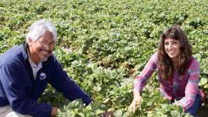 California Strawberry Grower Trials Raised Bed Growing System