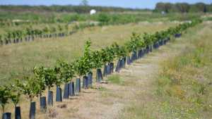 Groundwork Set For Fruitful Future In Florida Citrus