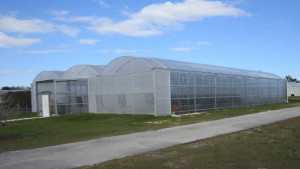 8 Production Tips For Greenhouse Production