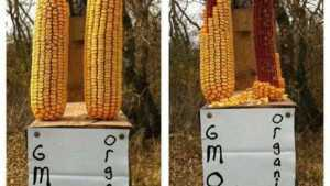 GMO Debate Worth The Fight [Opinion]