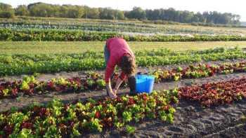 Uproot Farms organic