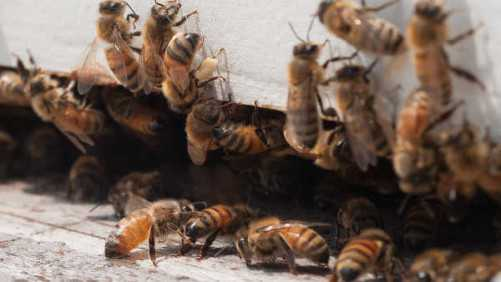 Bayer CropScience Continues Its Second Annual Bee Care Tour