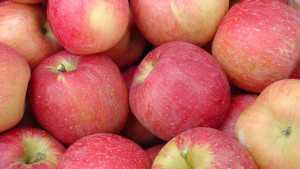 'EverCrisp' Apple gets PLU Approval