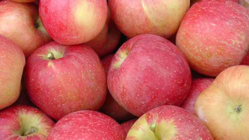 2009 Apple Grower Of The Year Finalists