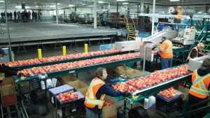Fruit Processor To Expand Operations In Virginia