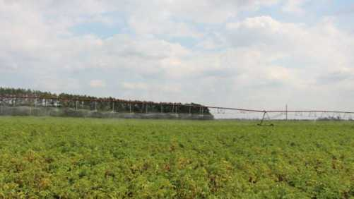 Potato Field Day To Focus On Seed Lot Evaluations, Crop Protection